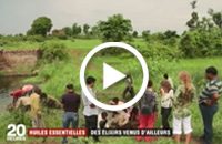 Vidéo du reportage en inde