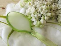 Démaquillant huileux au Lilas blanc